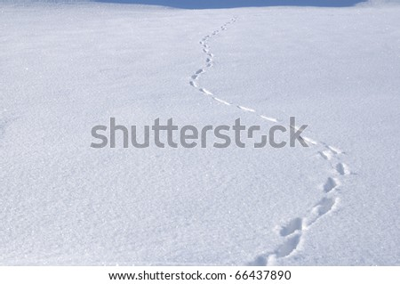 Animal Tracks in Snow Covered Field - stock photo