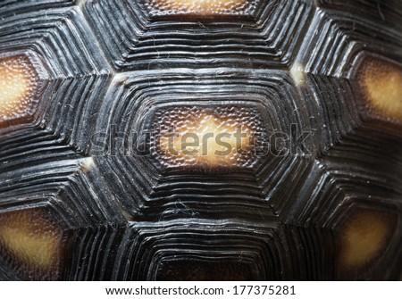 animal turtle shell pattern texture - stock photo