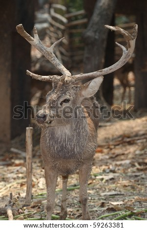 Animal White Tail Deer Buck deer standing in tree background nature - stock photo