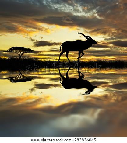 animals and nature - stock photo