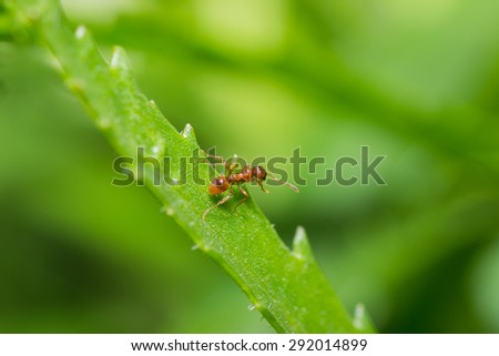 animals ant insect pets insects macro leg color close-up - stock photo