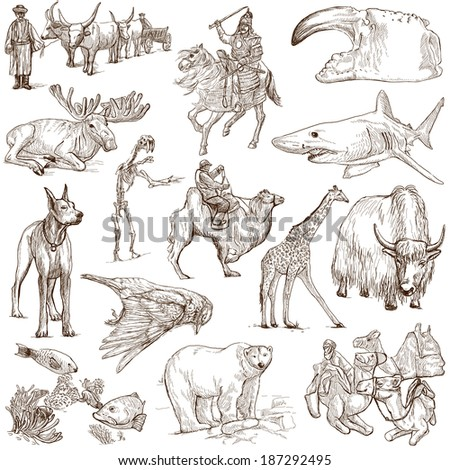 Animals around the world (collection no.8, white ) - Collection of an hand drawn illustrations. Description: Full sized hand drawn illustrations drawing on white background. - stock photo