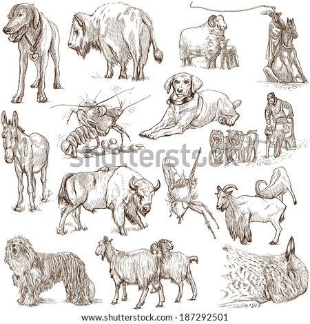Animals around the world (collection no.5, white ) - Collection of an hand drawn illustrations. Description: Full sized hand drawn illustrations drawing on white background. - stock photo