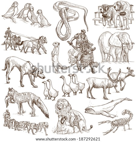 Animals around the world (collection no.6, white ) - Collection of an hand drawn illustrations. Description: Full sized hand drawn illustrations drawing on white background. - stock photo