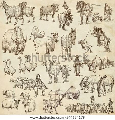 Animals around the world (set no.12 - FARM ANIMALS) - Collection of an hand drawn illustrations. Description: Full sized hand drawn illustrations drawing on white. - stock photo