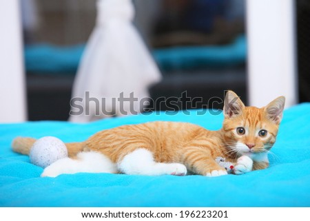 Animals at home. Red cute little baby cat pet kitten laying on bed playing with ball turquoise blanket - stock photo