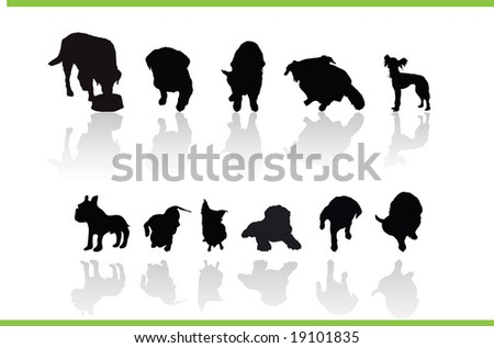 animals collection - stock photo