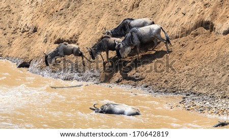 Animals crossing the Mara River during the Great Migration between Tanzania and Kenya - stock photo