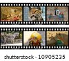 Animals in frames of film (my photos), isolated on white background - stock photo