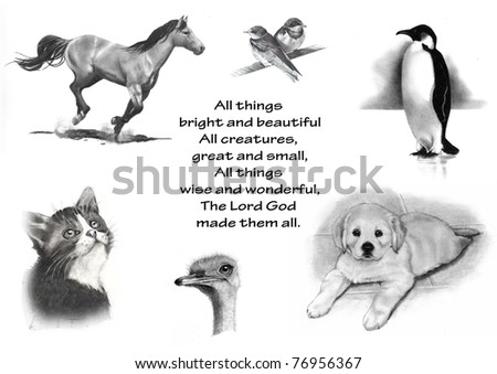 Animals in Pencil: All Things Bright and Beautiful - stock photo
