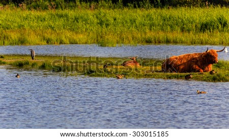 Animals in the nature in Holland - stock photo