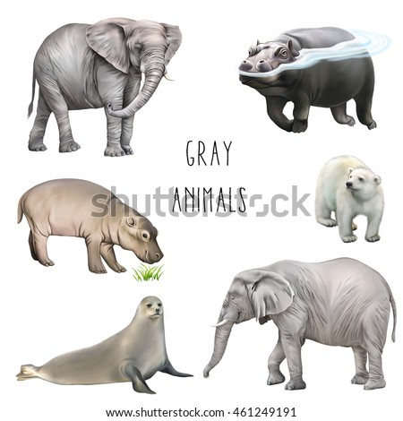 Animals of gray color: elephants, rhinoceros, seal, and baby hippopotamus, gray mouse isolated on white background