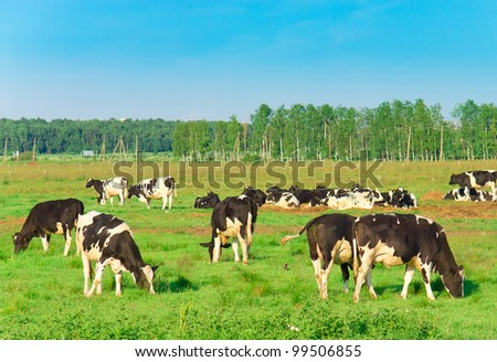 Animals Producing Milk On a meadow - stock photo