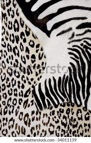 animals skins - stock photo