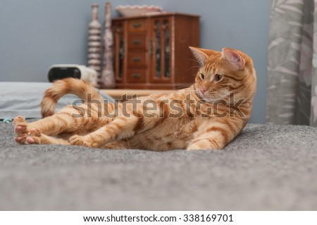 Annoyed Tabby cat stretching his legs - stock photo