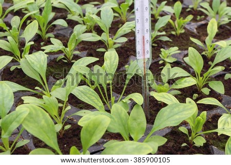 Annual flower seedlings in plastic flowerpots with thermometer to control soil temperature in the modern greenhouse - stock photo
