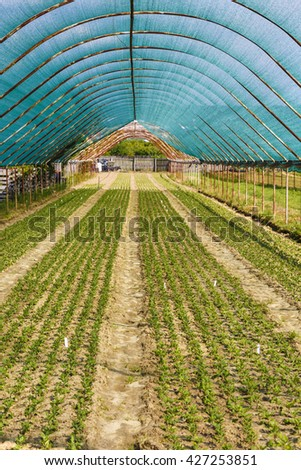 Annual flower seedlings in the modern greenhouse in spring - stock photo