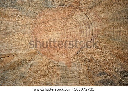 Annual rings - stock photo