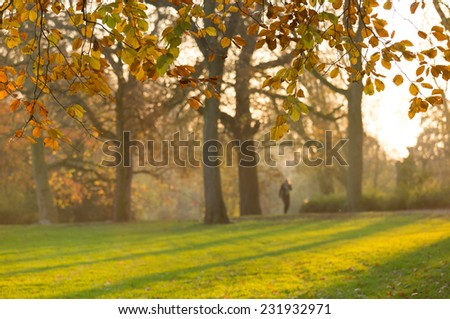 Anonymous woman walking in a park in autumn colors on a sunny afternoon.