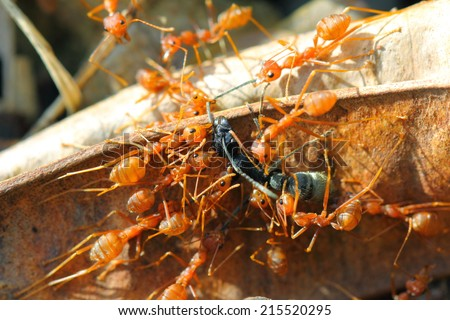 ant attack to defend territory.