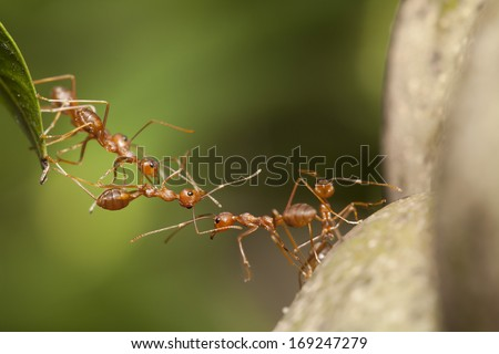 Ant bridge unity  - stock photo