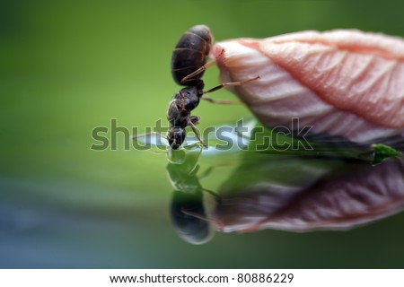 Ant drinking water with a beautiful colored and soft background - stock photo