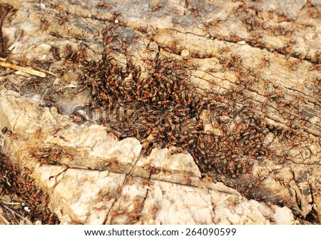 ant hill  - stock photo