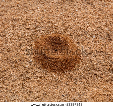 Ant hill created in sand and forming a volcano like structure
