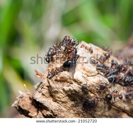 Ant hill on a tree close up - stock photo