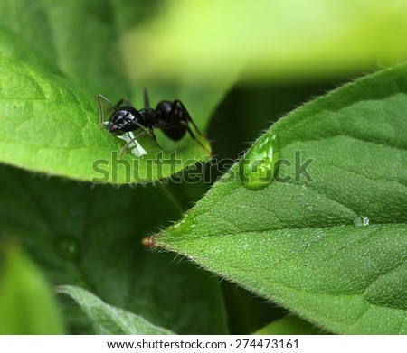 Ant in garden among moist green plant leaves - stock photo