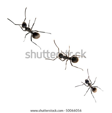 Ant isolated on white - stock photo