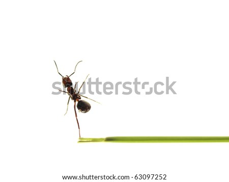 Ant isolated on white background - stock photo