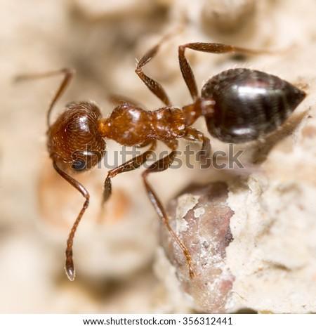ant on the ground. Super Macro - stock photo