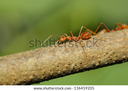 ant on tree