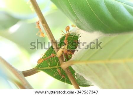ant predators - stock photo