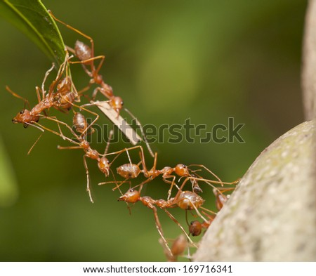 Ants Teamwork Stock Images, Royalty-Free Images & Vectors ...