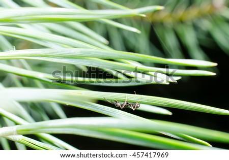 ant under pine needle - stock photo