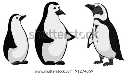 Antarctic black and white emperor penguins on white background - stock photo