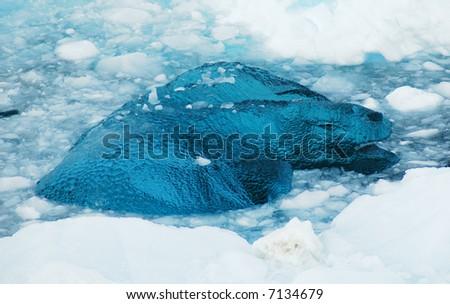 Antarctic blue glass ice - stock photo