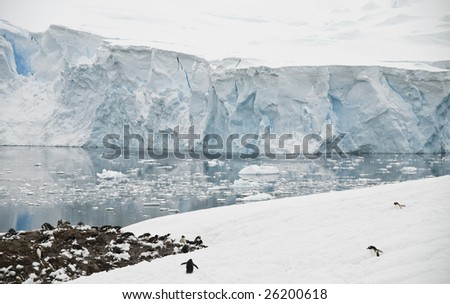 Antarctic landscape with gentoo penguin colony - stock photo
