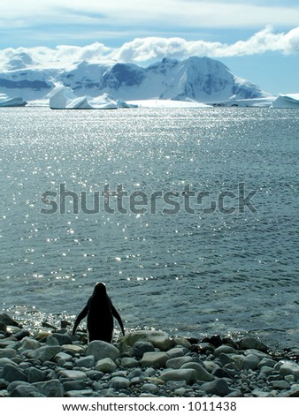 Antarctic penguin - stock photo