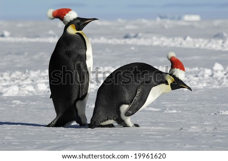 Antarctic penguin couple on Christmas - stock photo