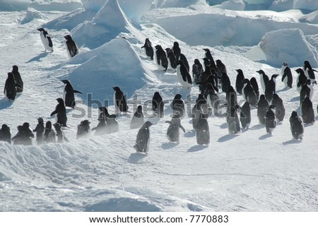 Antarctic penguin group - stock photo