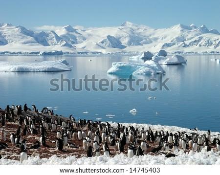 Antarctic penguin group, reflection of icebergs, Antarctica - stock photo