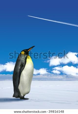 Antarctic penguin wondering white jetplane trace on blue sky background - stock photo