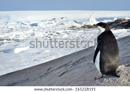Antarctic pinguin and pretty view on antarctic wildlife