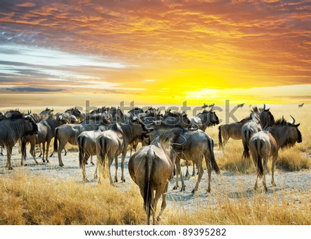 antelope Gnu - stock photo