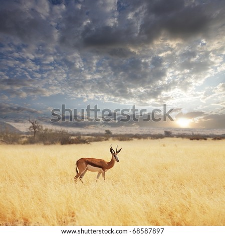 antelope in bush - stock photo
