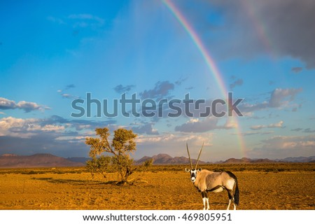 Antelope-oryx standing under magnificent rainbow. The  rainbow crosses the sky over desert. The concept of exotic tourism in Namib-Naukluft National Park, Namibia