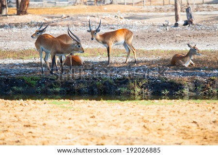 Antelopes having a rest in a park outdoor - stock photo